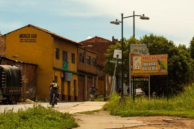 Iguanas en la vía San Gil, Santander, Colombia