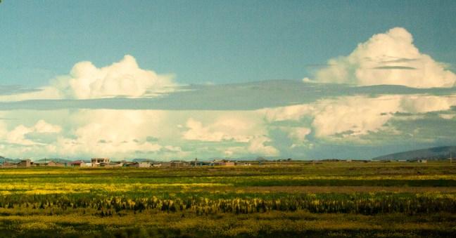Praderas de altura Carretera de Puno a Desaguadero. Perú
