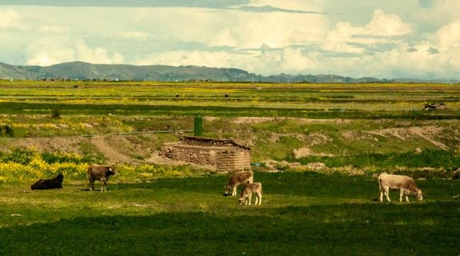 Vida doméstica Carretera de Puno a Desaguadero, Perú