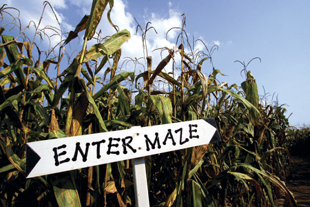 What-to-know-about-Corn-Maze