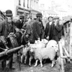 Are Consumers Like Hardy's Sheep?