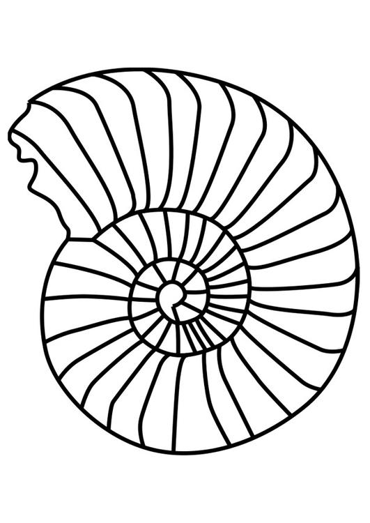 Coloring Page Ammonite Mollusc Img 27194
