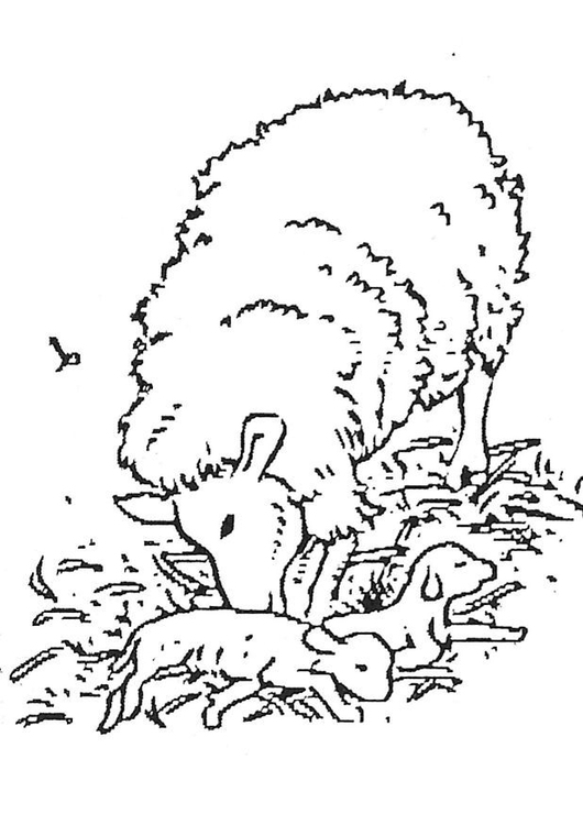 Coloring Page Newborn Lamb Free Printable Coloring Pages
