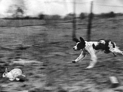 Bầy chó và thợ săn: bài học về lương thưởng cho nhà quản lý