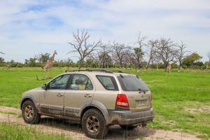 Moremi Game Reserve / Chobe NP / Botswana