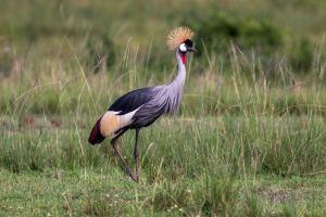 Queen Elizabeth NP / Oeganda