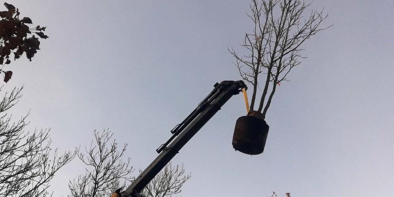 Plaatsen bomen m.b.v. kraa