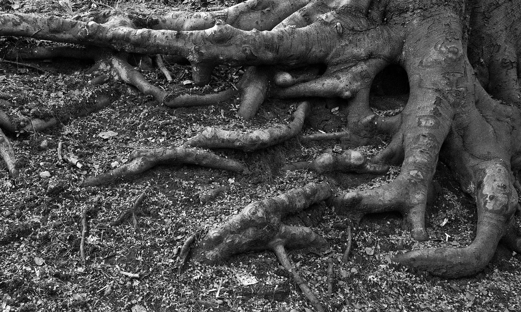Tree Root Pattern