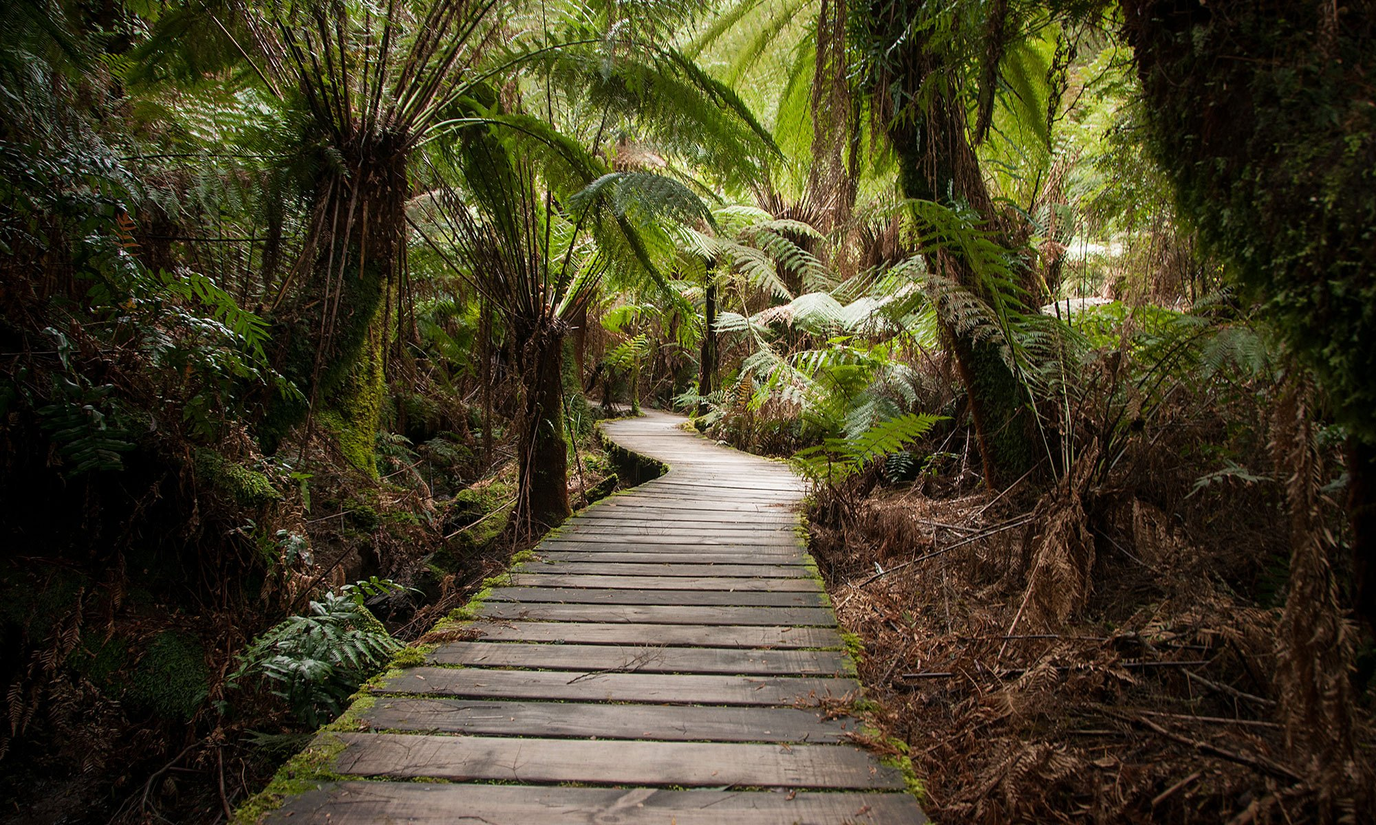 Boardwalk through the Rainforest