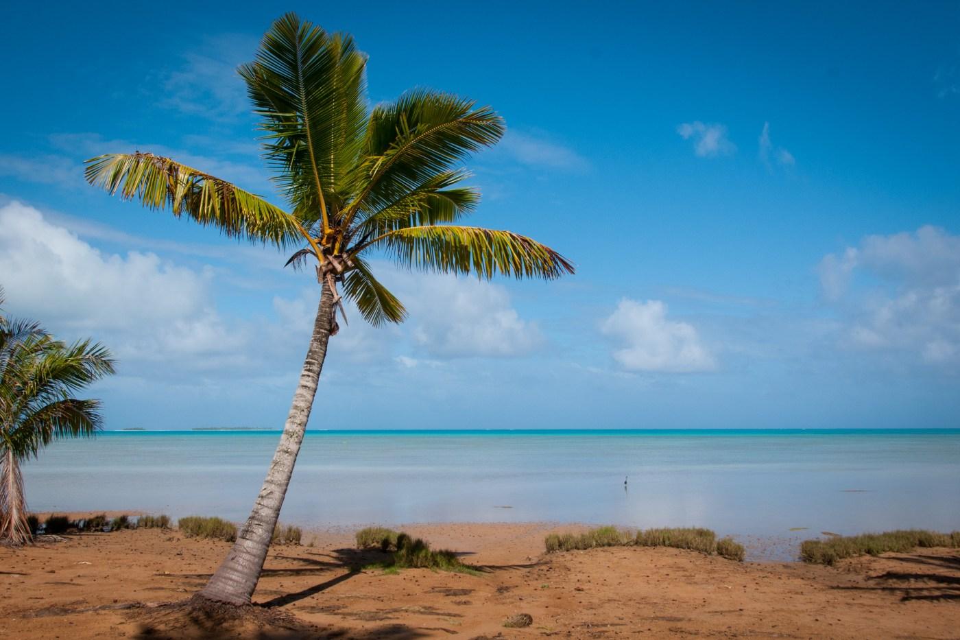 Palm Tree at Aitutaki lagoon, Cook Islands