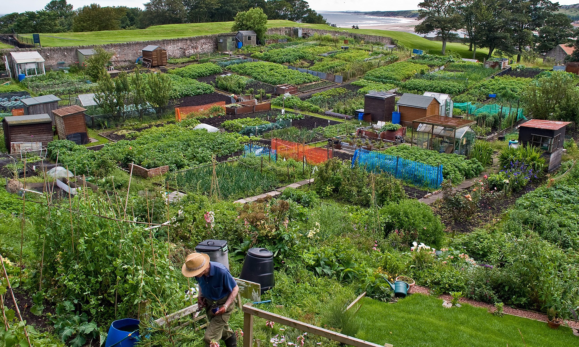 Allotments in Berwick-upon-Tweed