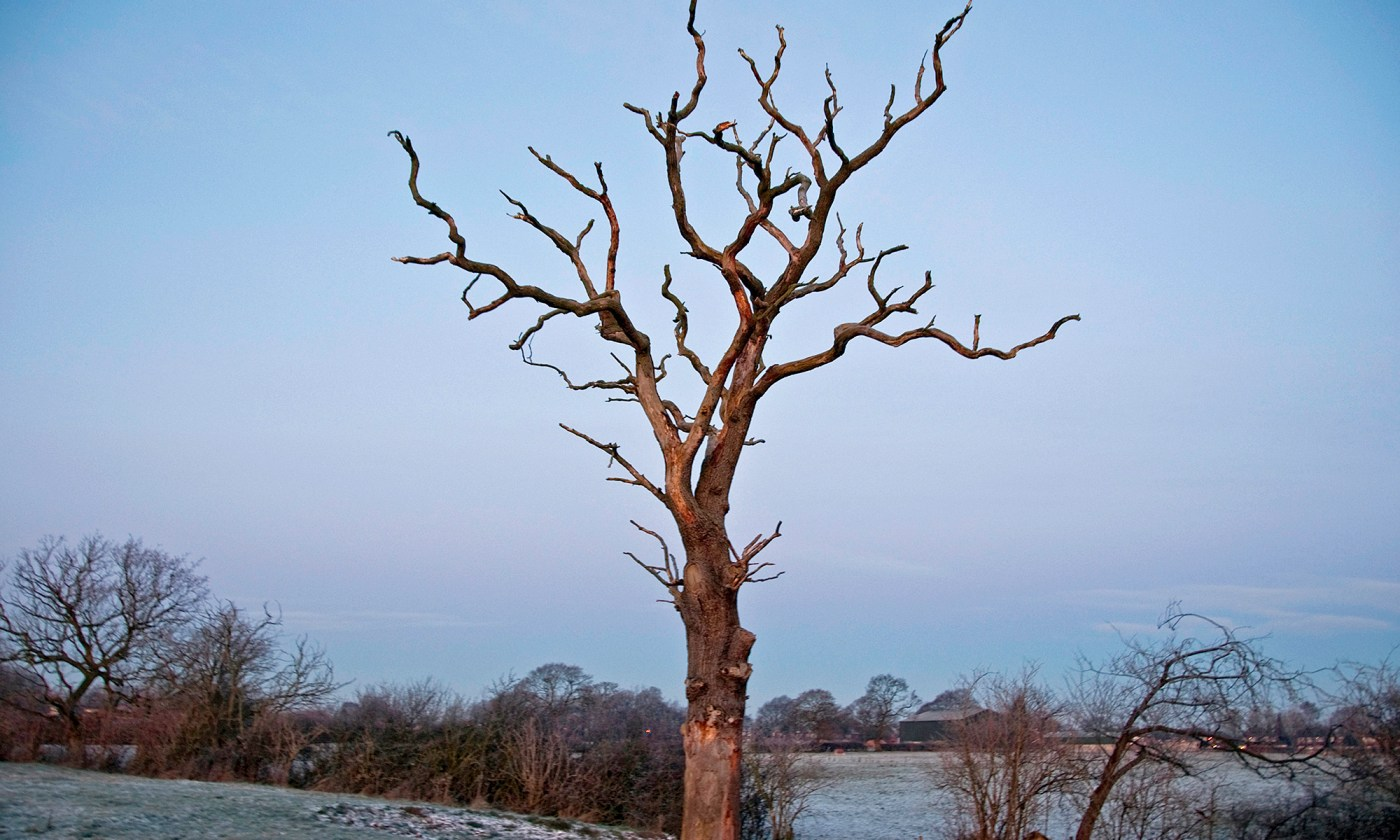 Bare Tree in the Frost at Dawn