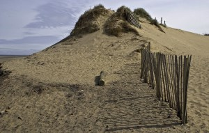 Formby Sand Dune and Fence