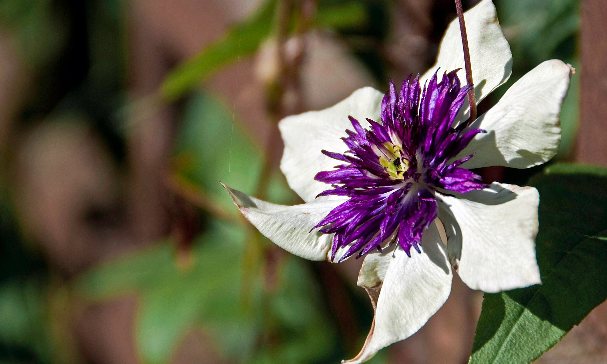 Purple and White Flower Head