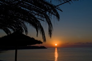Silhouetted Palm Trees at Sunrise