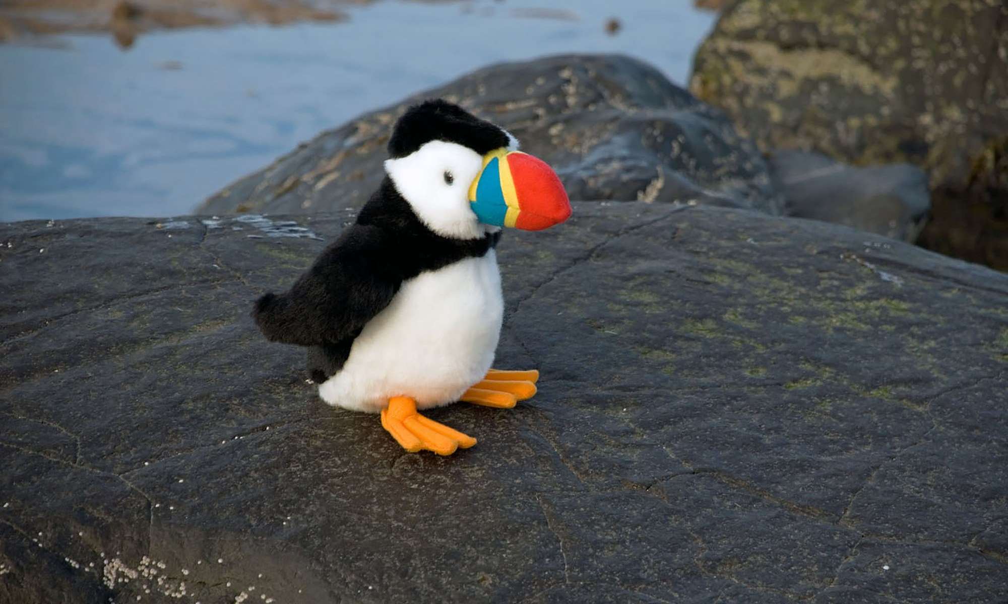 Toy Puffin on the Rocks