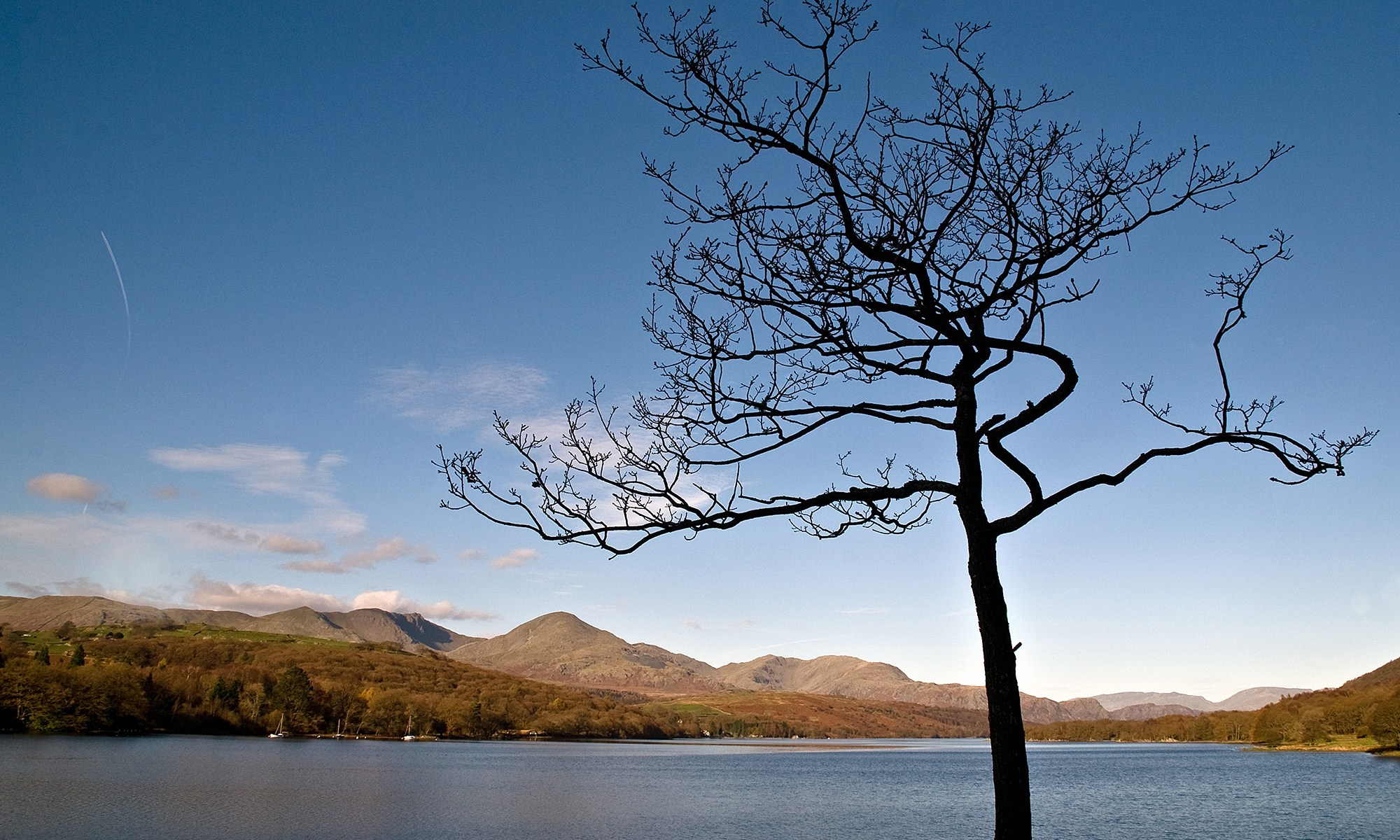 Tree Silhouette, Coniston Water, Lake District