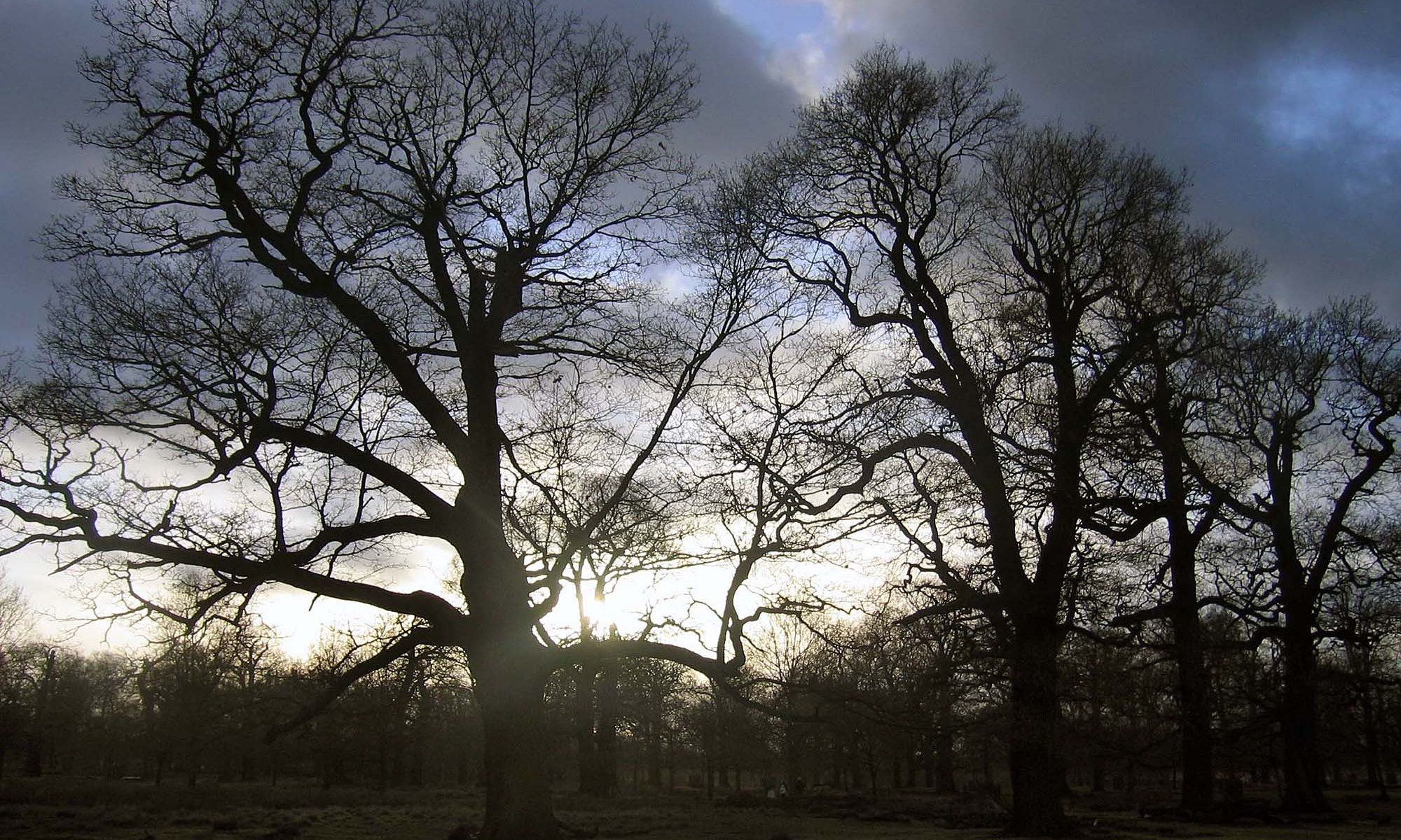 Skeleton Tree Sunset at Dunham Park