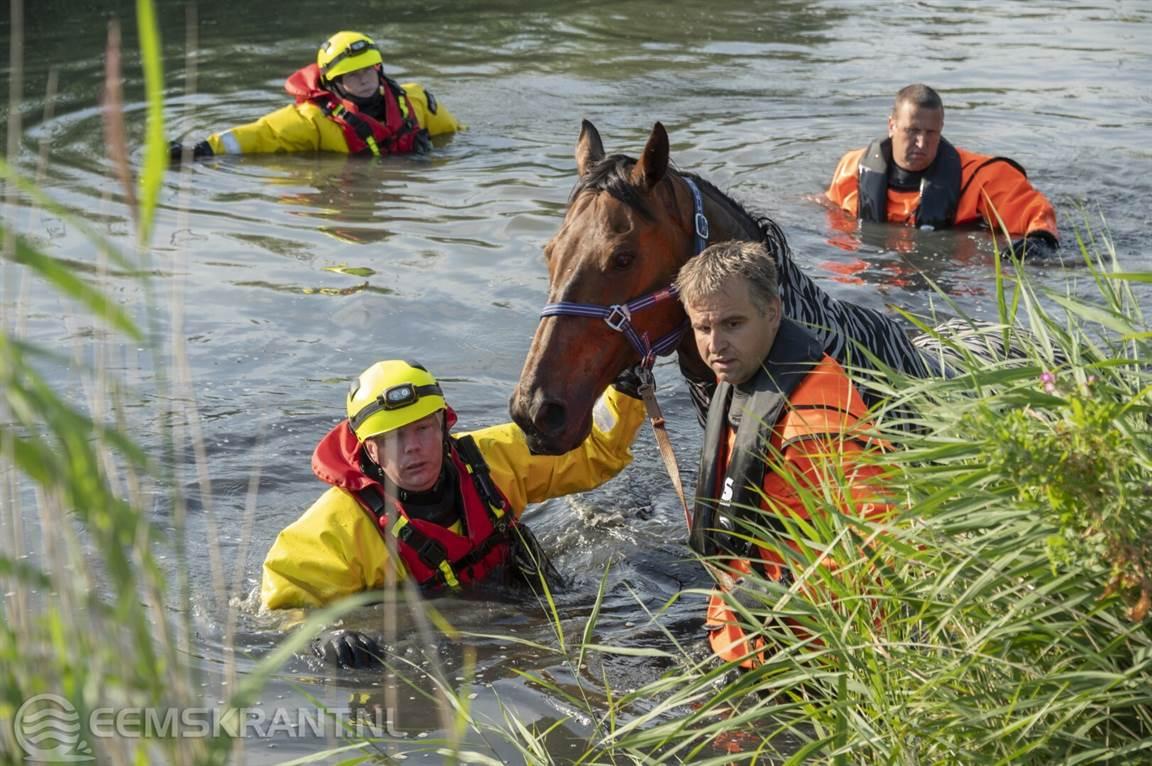 Holwierde: de Brandweer redt een paard uit het Bierumermaar | ?@Eemskrant? .