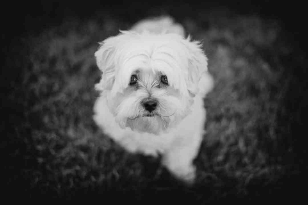 fotoshoot hond Hoofddorp