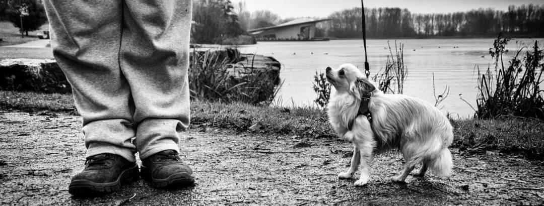 hondenfotografie Nieuw-Vennep