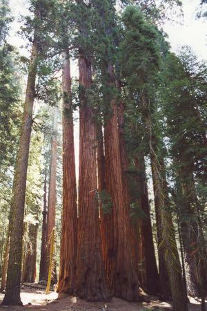 20010518 Sequoia NP