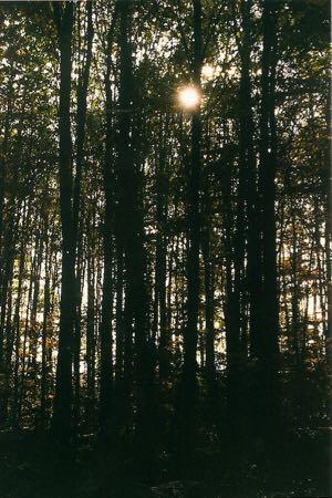 200110 bos Oosterhout