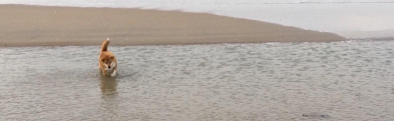 Ami in zee