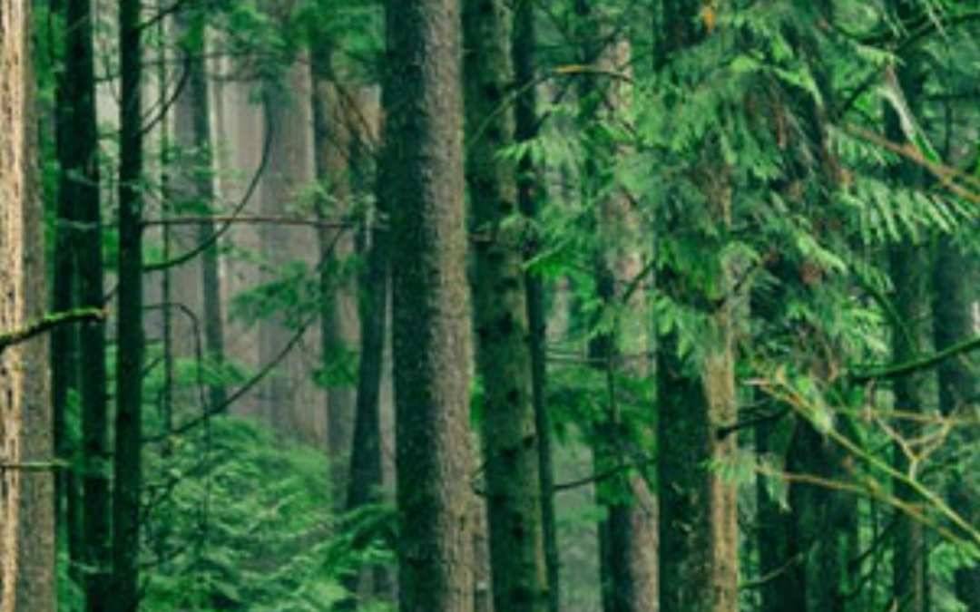 Call for an updated and stronger EU Forest Strategy