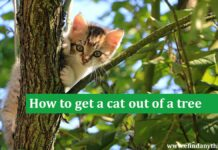 How to get a cat out of a tree