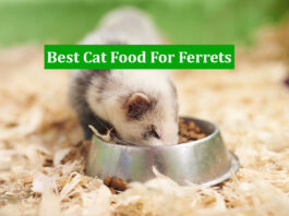Best Cat Food For Ferrets