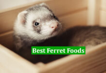 Best Ferret Foods