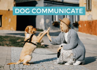 Dog Communicate