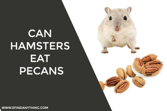 Can Hamsters Eat Pecans