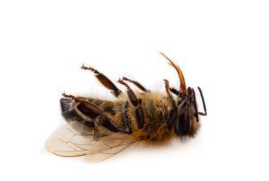 Pesticides : les députés français approuvent le retour des néonicotinoïdes