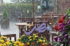قصيدة بعنوان. ***عصافير المطر***  