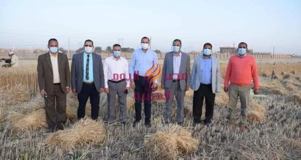 حصاد القمح في مزرعة جامعة سوهاج الجديدة ومشاركة رئيس الجامعة والافطار مع عمال | حصاد