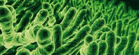 Mikroorganismen