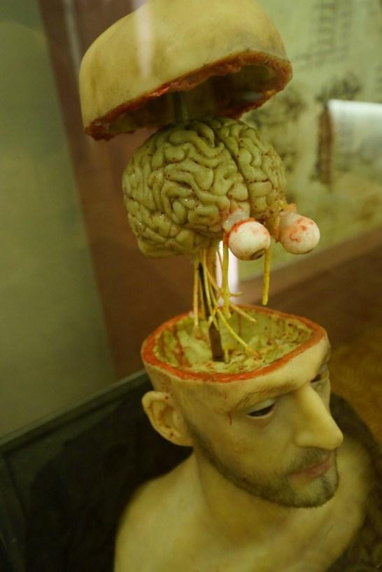 視覺神經解剖。