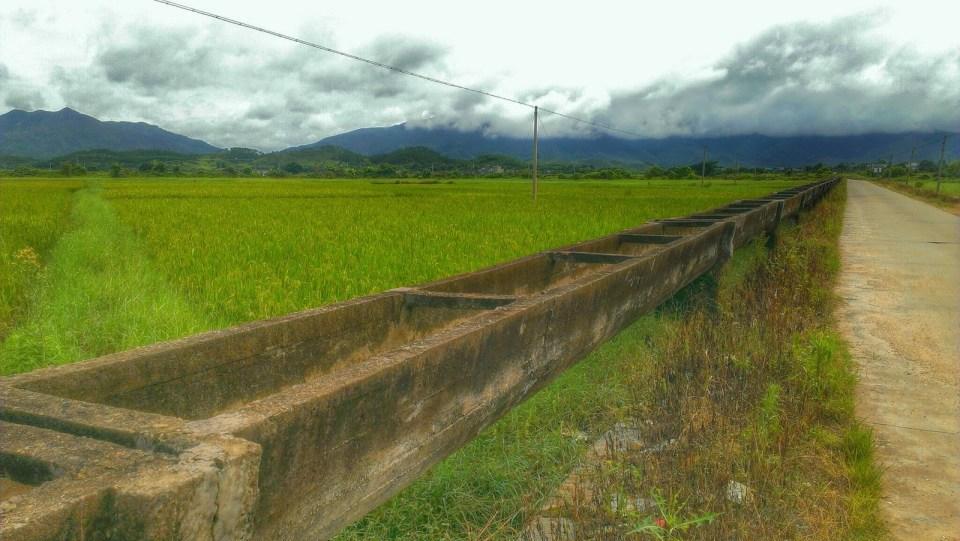 稻田的輸水系統。