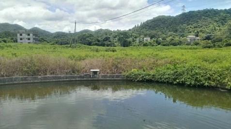 下禾坑的風水池。