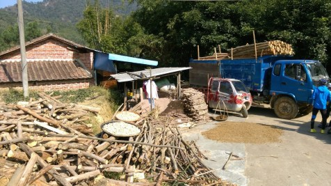 不知是否收成日子?林場內不時見有車輛運載木材。