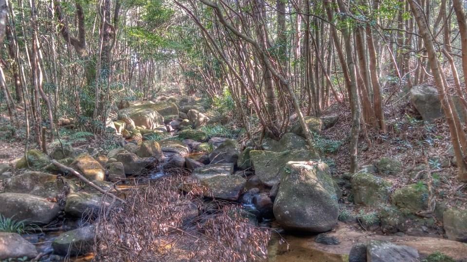 古田保護區內的原始森林。