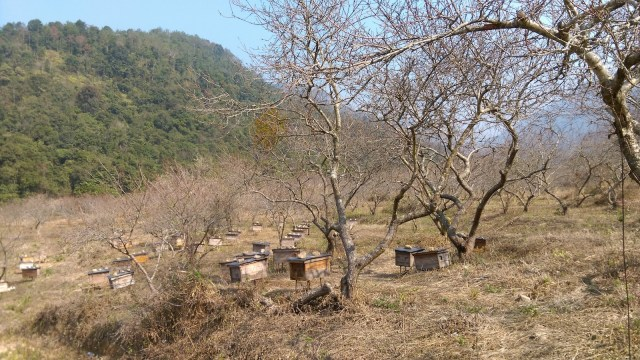 古田一帶有不少蜂農。