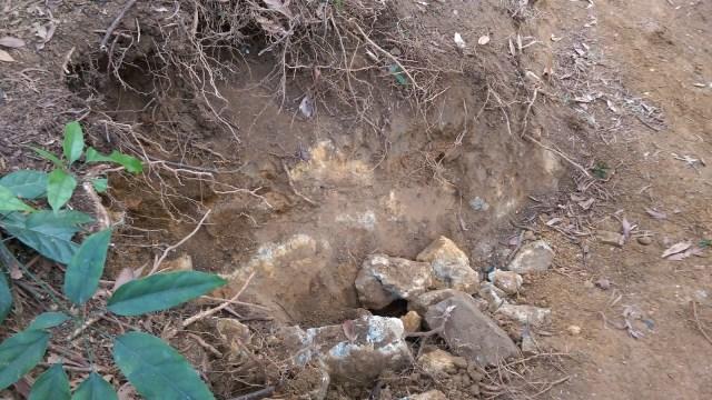 在單車徑旁找到一塊埋在泥裏的大石,只外露了小角。