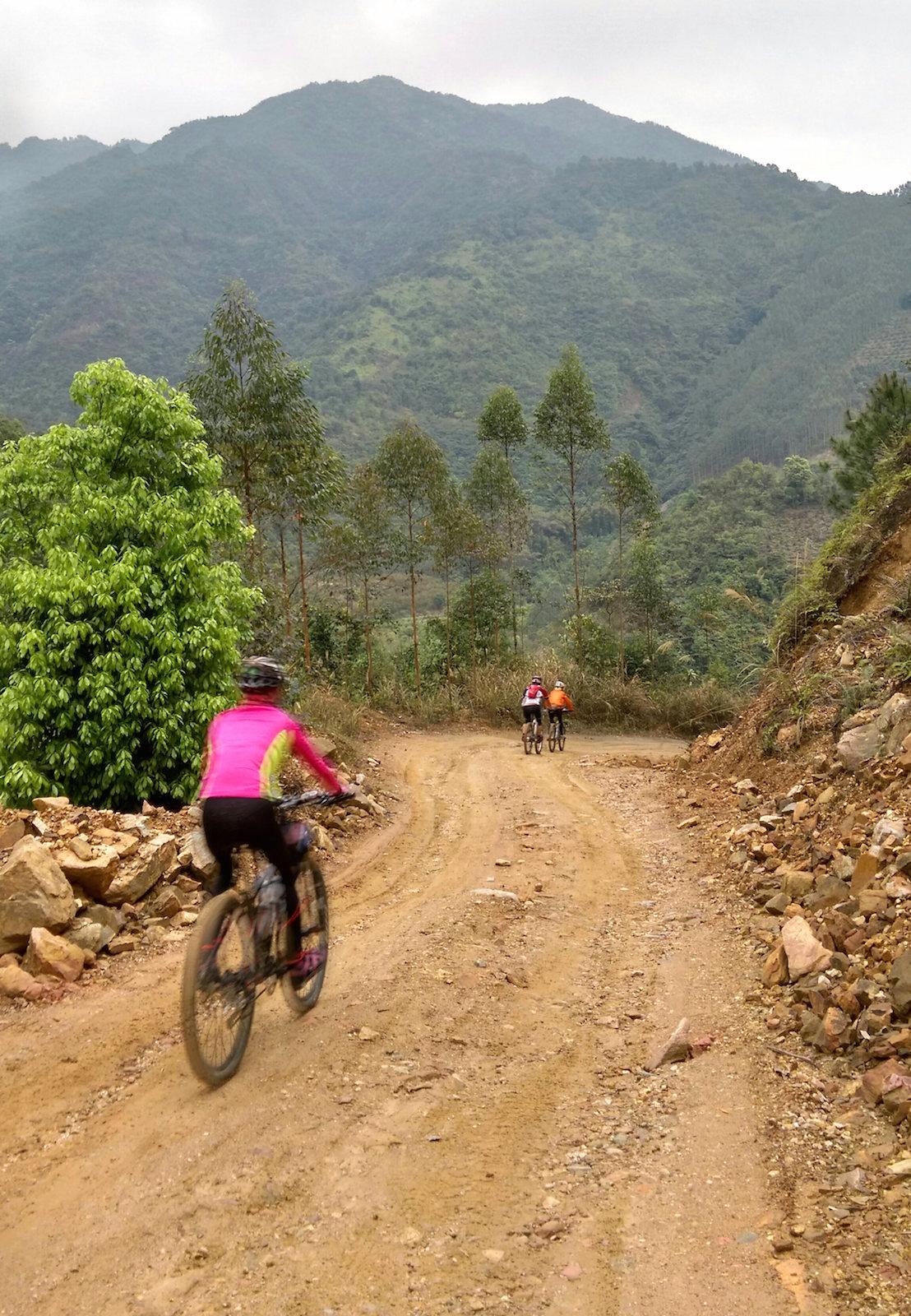 穿梭桔林的山路。