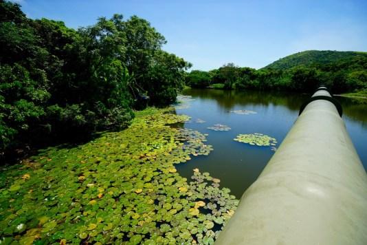 山雞湖的特別,是一條東江水管橫越其中。