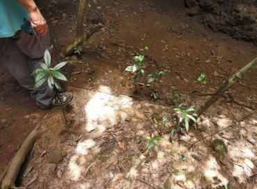 2012 年行山人士報告發現鐵板,照片中見鐵板邊緣。