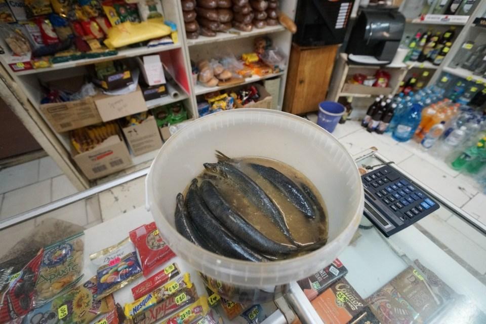 「受輻射的鹹魚」?當然要試試!