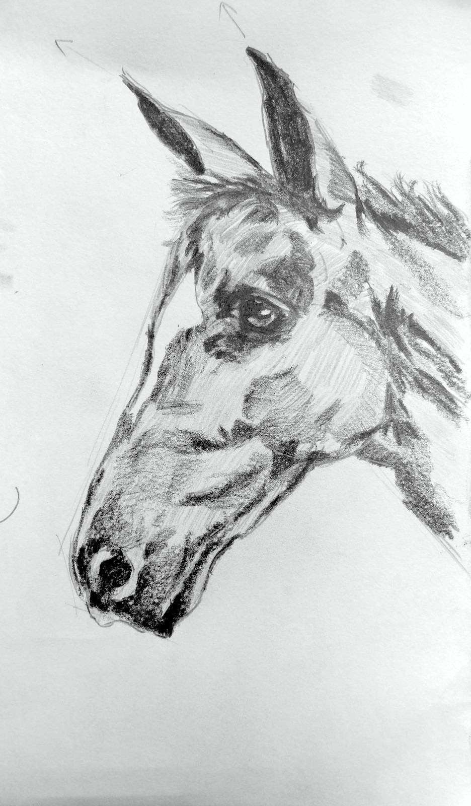 馬(課堂示範)